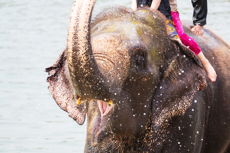 indian animal: Elephant bathing in the river, Chitwan, Nepal Stock Photo