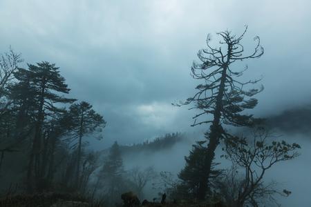 mist: Jungle in Himalaya mountains, Nepal
