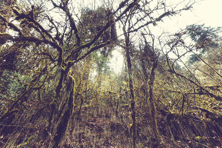 Jungle in Himalaya mountains, Nepal