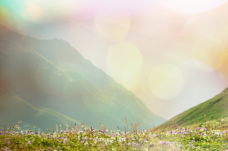 sunrise mountain: Mountain meadow in sunny day Stock Photo
