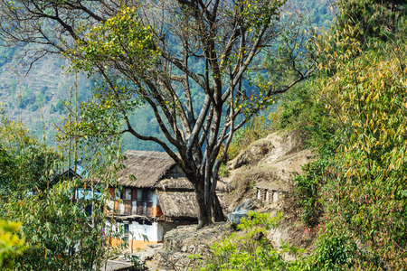 tree farming: Village in the Nepalese mountains