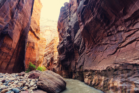 zion: Narrows in Zion National Park, Utah