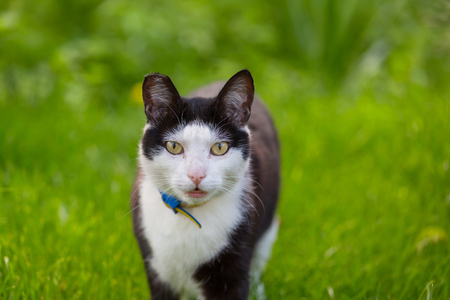 Cat in the green grass Imagens
