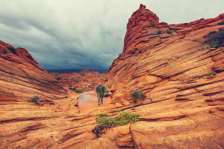 paria canyon: Coyote Buttes of the Vermillion Cliffs Wilderness Area, Utah and Arizona Stock Photo