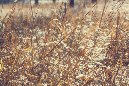 skie: Frozen grass in the mountains