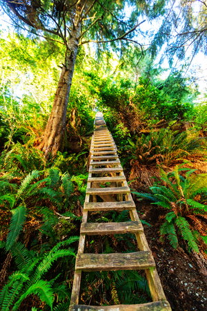 british weather: Rain forest in Vancouver island, British Columbia, Canada Stock Photo