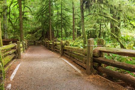 vancouver island: Rain forest in Vancouver island, British Columbia, Canada Stock Photo