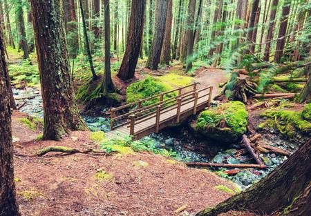 cicuta: Rain forest in Vancouver island, British Columbia, Canada Foto de archivo
