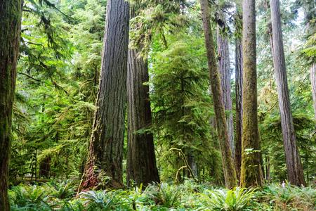 Rain forest in Vancouver island, British Columbia, Canada Stock Photo