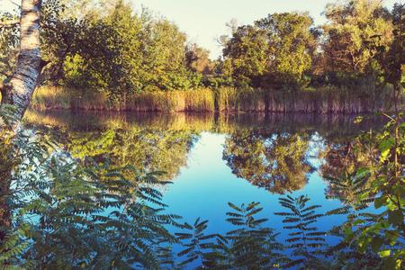 nenuphar: Green summer lake in the forest