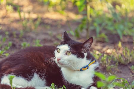 Cat in the green grass Фото со стока
