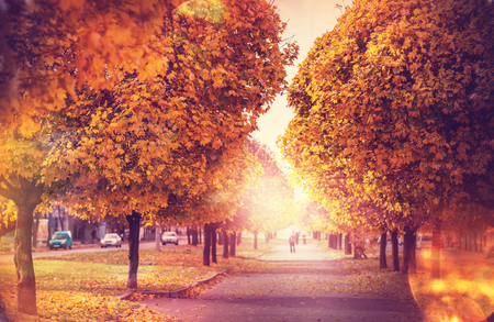 woodscape: Beautiful alley in fall season in the city with yellow colored trees Stock Photo