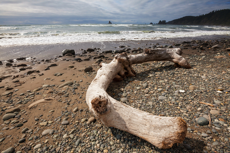 rigorous: Scenic and rigorous Pacific coast in the Olympic National Park, Washington, USA