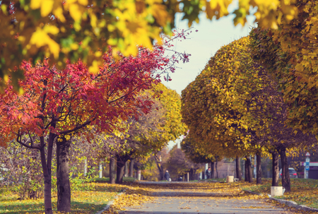garden city: Beautiful alley in fall season in the city with yellow colored trees Stock Photo