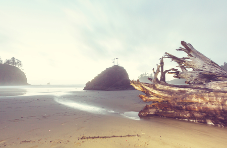olympic national park: Scenic and rigorous Pacific coast in the Olympic National Park, Washington, USA. Rocks in the ocean and large logs on the beach.