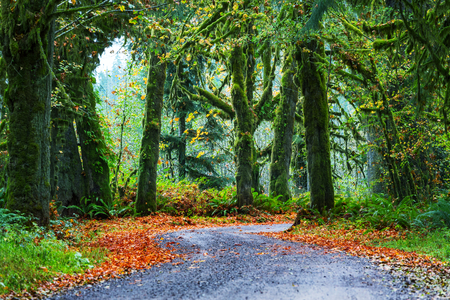 Forest in Olympic National Park, Washington Editorial