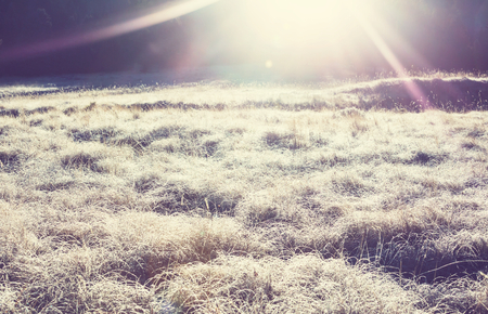 skie: Close-up shot of the frozen grass in the winter morning in mountains. Stock Photo