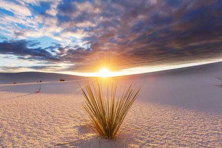 alamogordo: Unusual White Sand Dunes at White Sands National Monument, New Mexico, USA