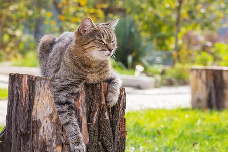 Close-up shot of the pretty tabby cat Фото со стока - 68820459