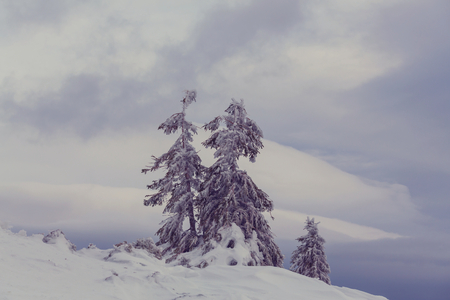 Winter scene forest covered with snow Stock Photo