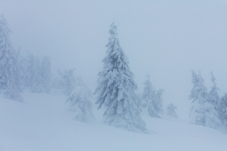 pascuas navideÑas: Scenic snow-covered forest in winter season. Good for Christmas background.