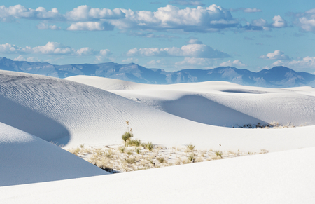 Unusual White Sand Dunes
