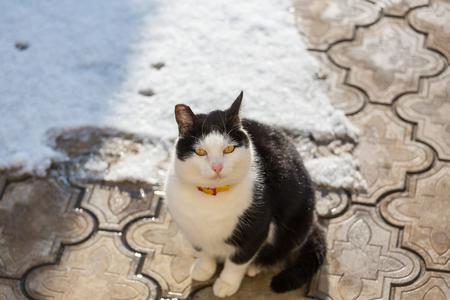 Close-up shot of the pretty tabby cat Фото со стока