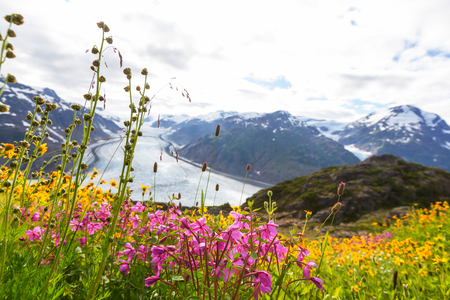 Mountain meadow in sunny day Stock Photo