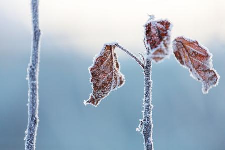 iceflower: close-up of ice