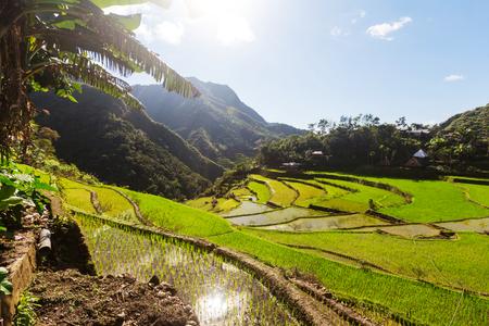 Hermoso Verde Terrazas De Arroz En Las Filipinas El Cultivo