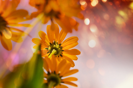 beautiful weather: Close-up shot of the beautiful flowers. Suitable for floral background.