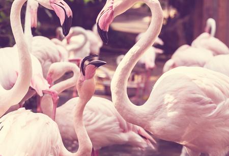 swarm: Flamingo Stock Photo