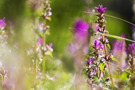 적합: Close-up shot of the beautiful flowers. Suitable for floral background.
