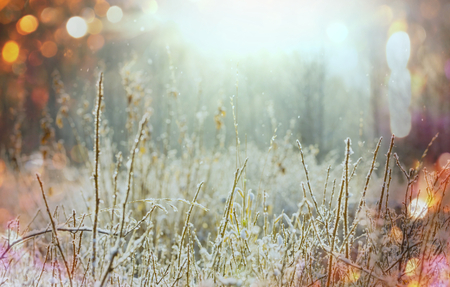 Close-up shot of the frozen grass in the winter morning in mountains. Stock Photo