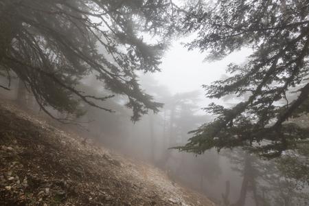 woodland  horror: Magic misty forest