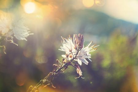 아름 다운 꽃의 근접 쐈 어입니다. 꽃 배경 적합합니다. 스톡 콘텐츠 - 78133163