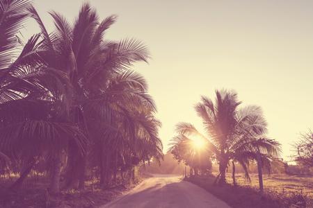 Dirt road in remote jungle