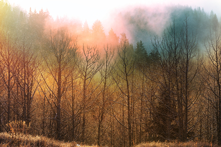 Late autumn landscapes. Trees covered with hoarfrost at sunrise. Stock Photo