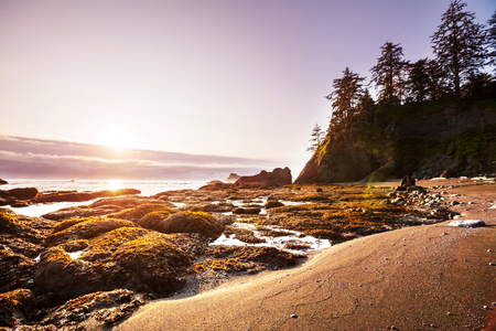 rigorous: Scenic and rigorous Pacific coast in the Olympic National Park, Washington, USA. Rocks in the ocean and large logs on the beach.