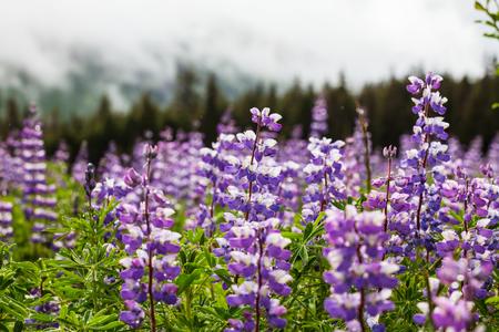 brash: Meadow in Alaska Stock Photo
