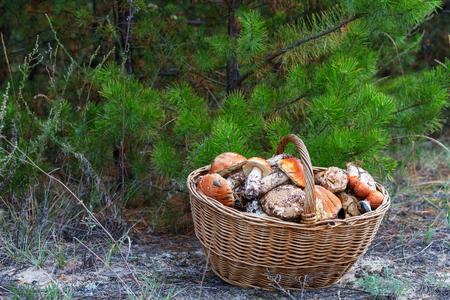 Mushrooms in Fall season