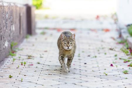 a cat walking
