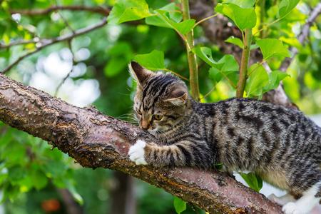 cat on tree Фото со стока
