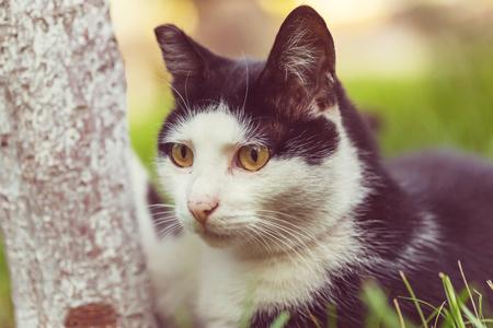 cat Фото со стока - 86802079