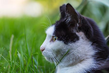 cat Фото со стока - 86802092
