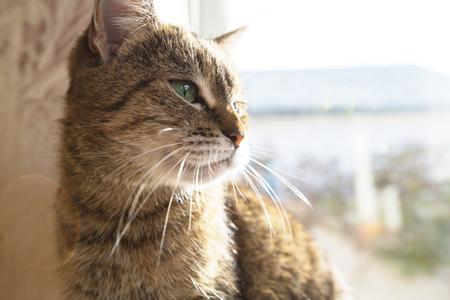 Close up view of a cat Фото со стока