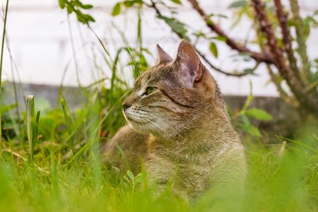 cat Фото со стока - 90014745