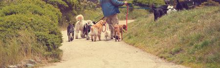 man walking many dogs