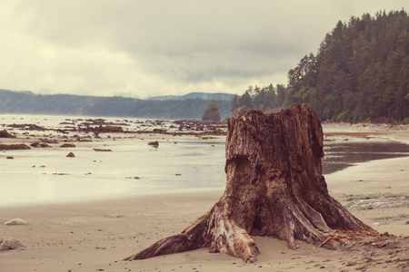 Scenic and rigorous Pacific coast in the National Park, Washington,