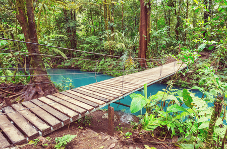 Handing Bridge in green jungle, Costa Rica, Central America